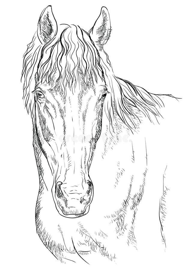Cheval portrait-14 illustration stock