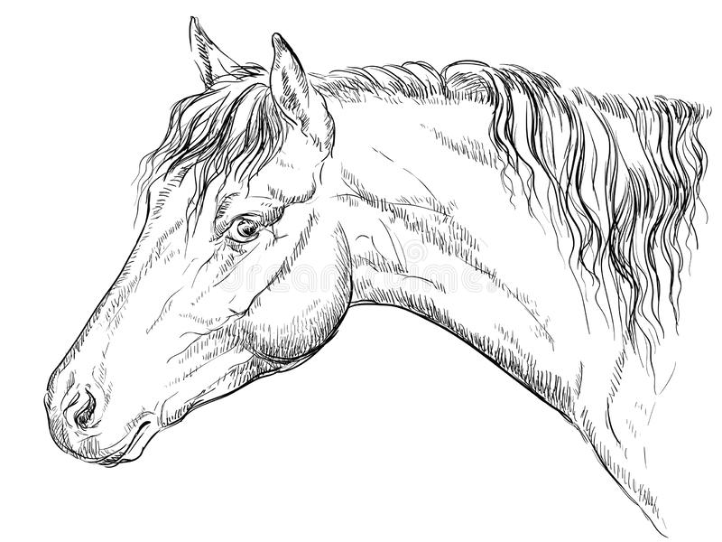 Cheval portrait-11 illustration stock