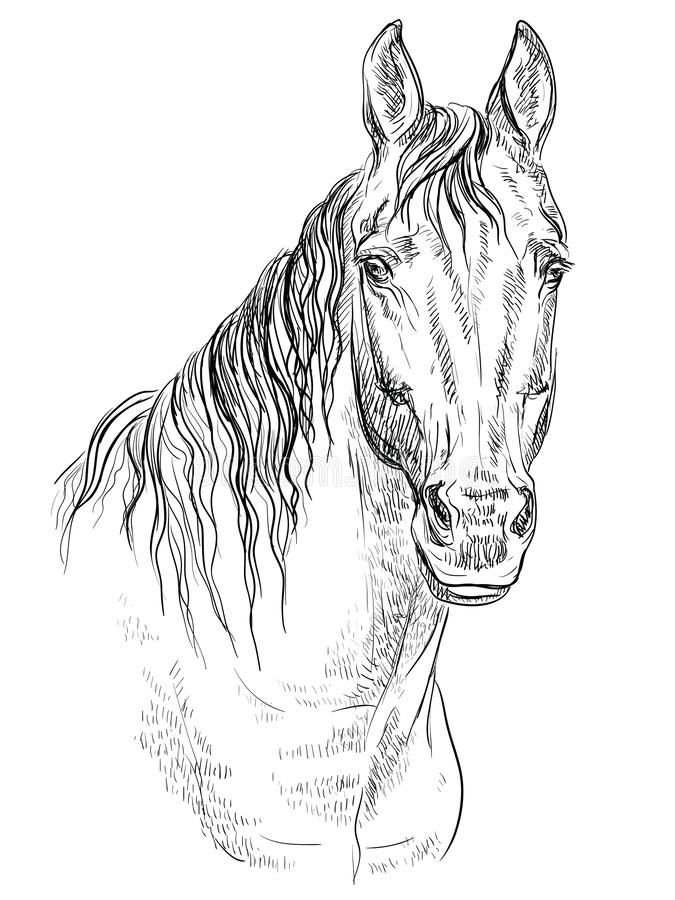 Cheval portrait-19 illustration libre de droits