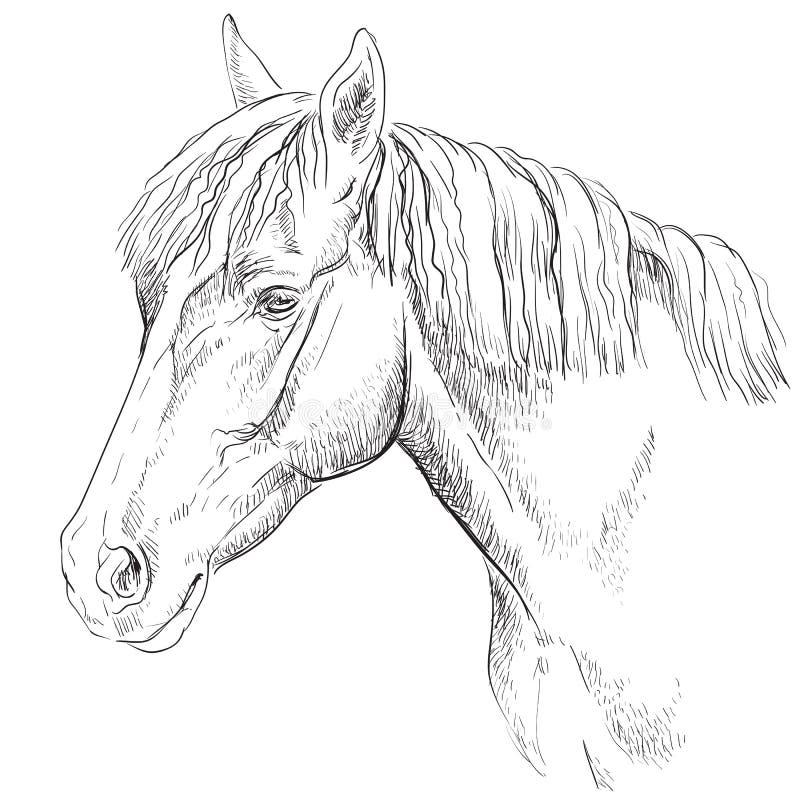 Cheval portrait-18 illustration libre de droits