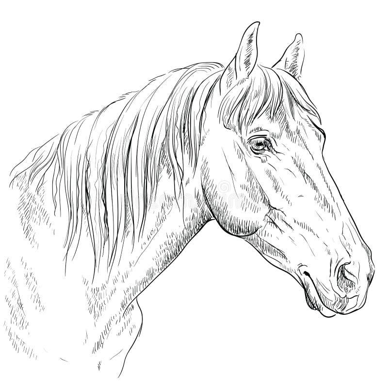 Cheval portrait-17 illustration libre de droits