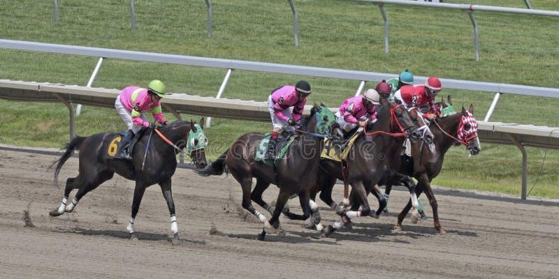 Cheval Racing photos libres de droits