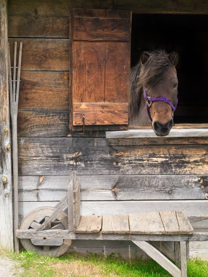 Cheval regardant à l'extérieur l'hublot. image libre de droits