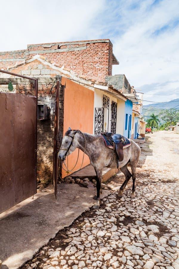 Cheval restant sur une rue pavée en cailloutis au centre du Trinidad, CUB photos libres de droits