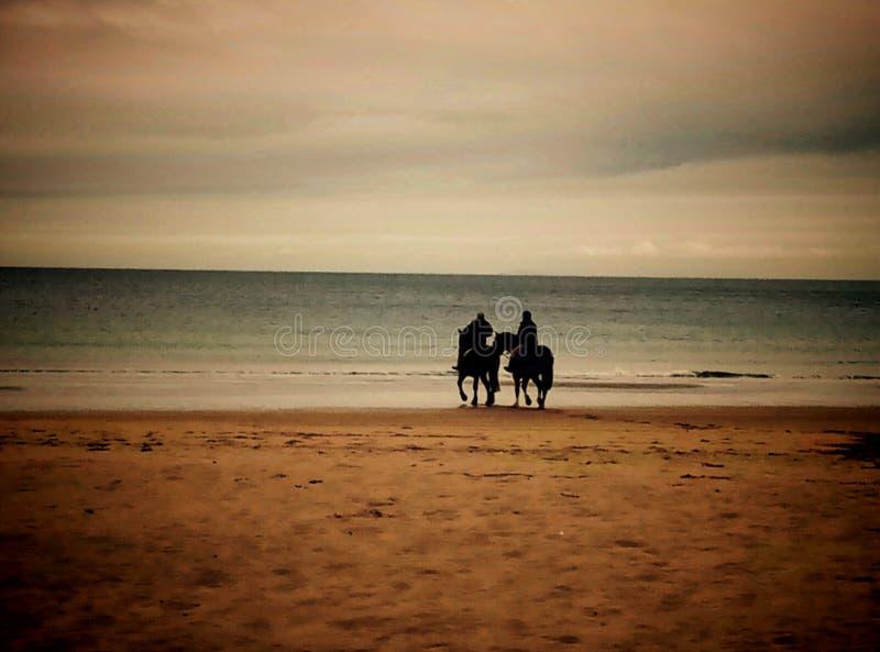 Cheval rinding dans la plage photos libres de droits