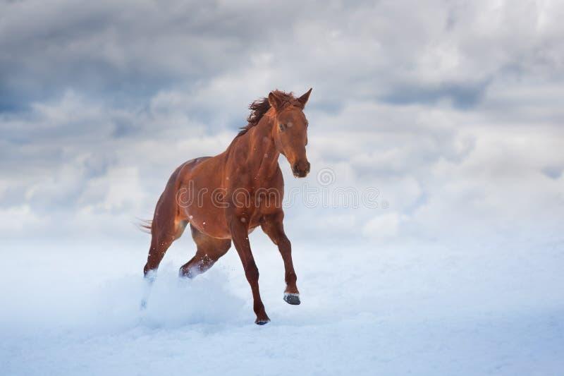 Cheval rouge avec la longue crinière image stock