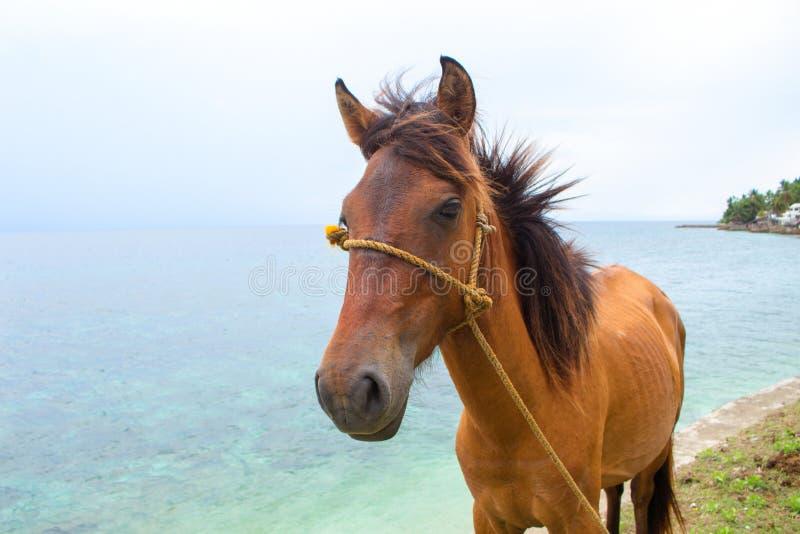 Cheval rouge et vue bleue de mer Photo de voyage Portrait de tête de cheval Bel animal de ferme photographie stock