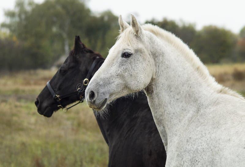 cheval se tenant dans un domaine sur une herbe sèche pendant l'automne photo stock
