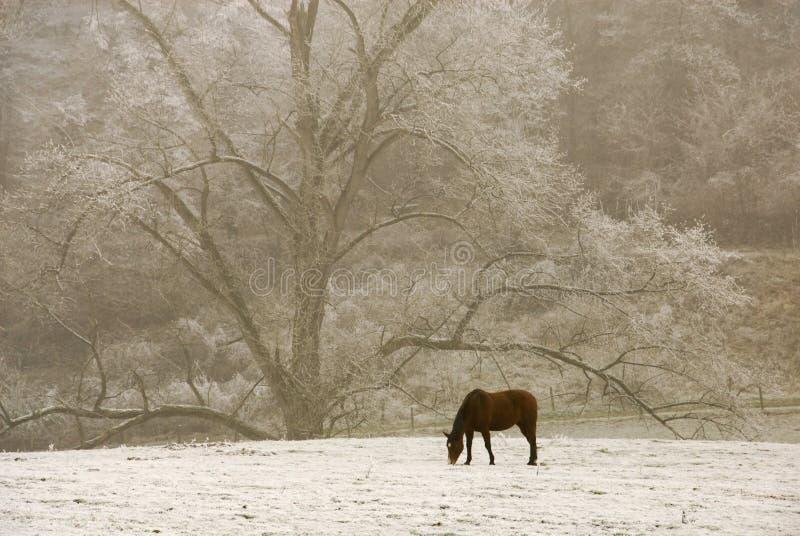 Cheval seul dans la neige image libre de droits