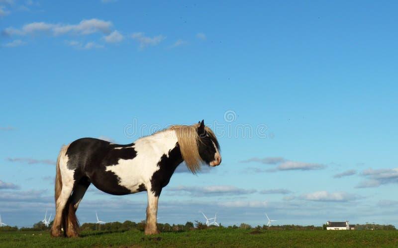 Cheval solitaire images libres de droits