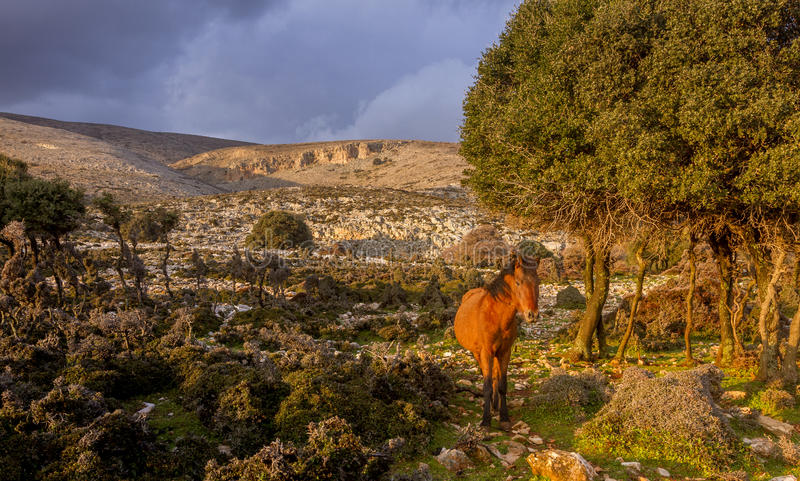 Cheval solitaire aux champs sauvages de l'île de Skyros, Grèce photographie stock libre de droits