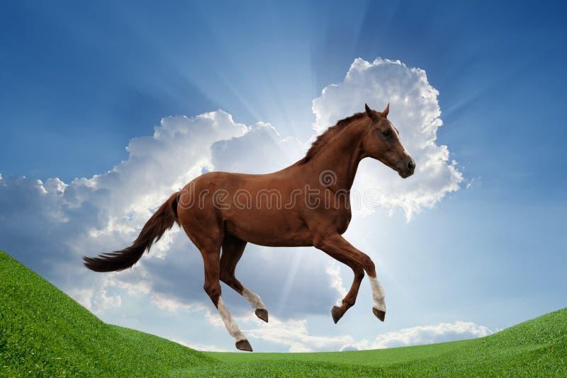 Cheval sur le champ vert photo stock