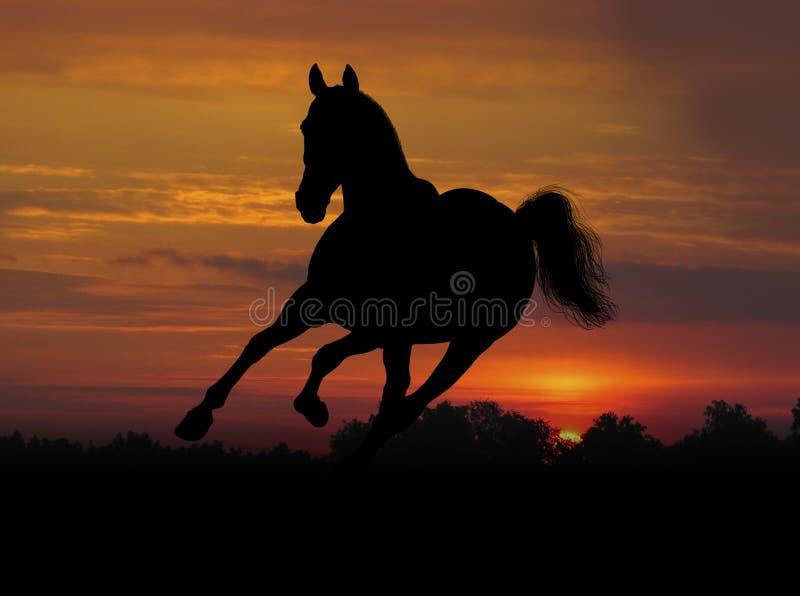 Cheval sur le coucher du soleil image stock