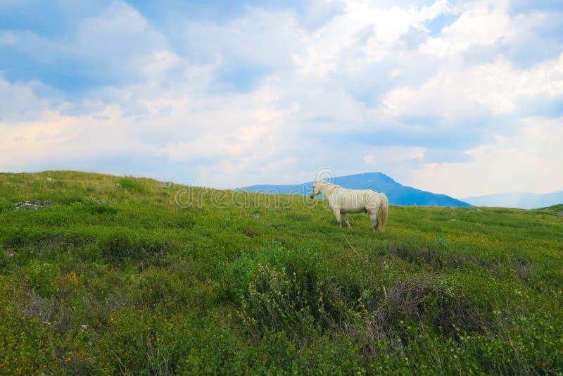 Cheval sur le pré d'herbe dans les montagnes, à l'arrière-plan une vallée de montagne dans les nuages photo stock