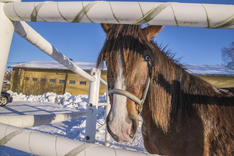Cheval sur Momarken photographie stock libre de droits
