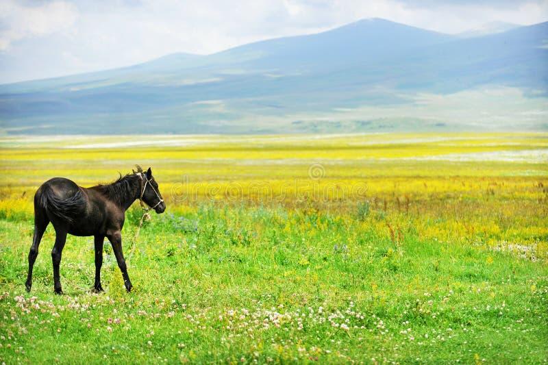 Cheval sur une plaine en été photos stock