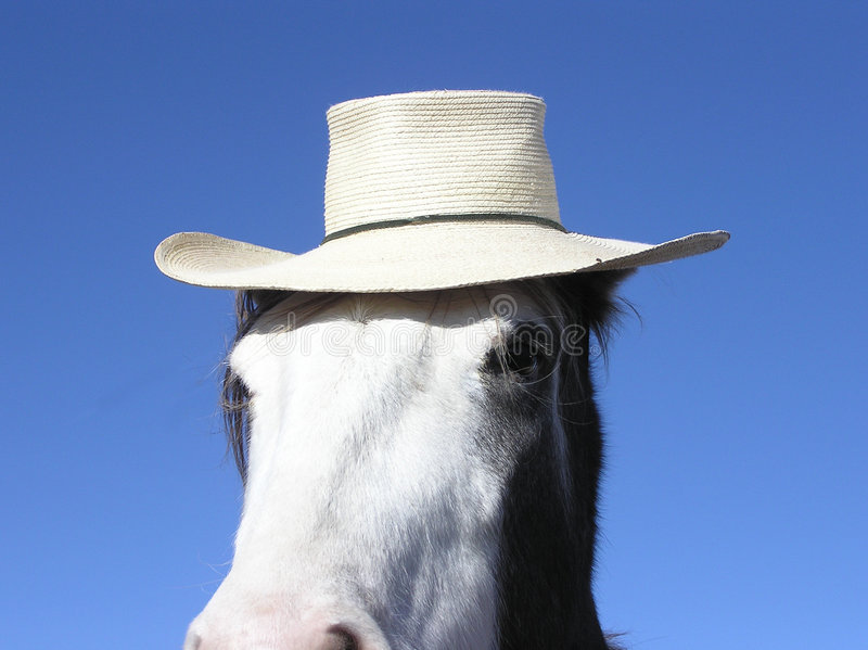 Cheval utilisant un chapeau photos libres de droits