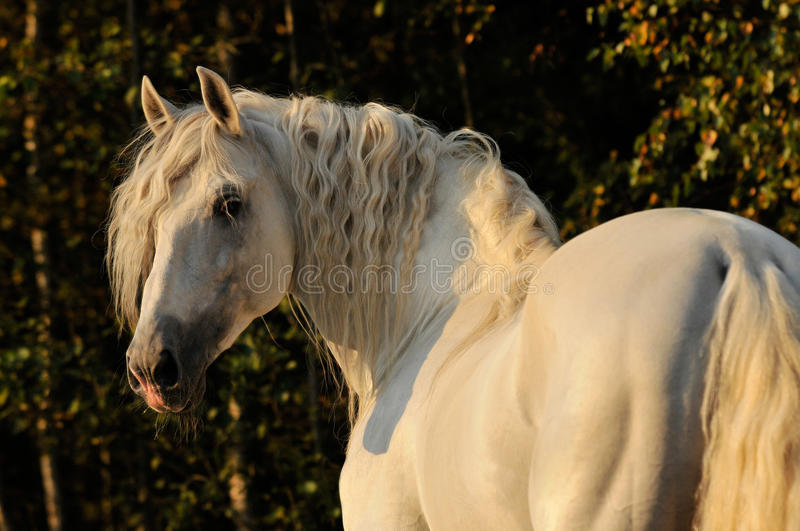 Cheval, White Horse In Autumn Stock Images