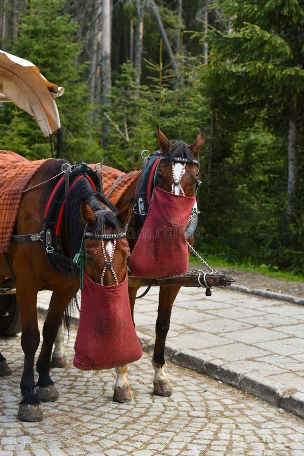 Chevaux armés dans l'alimentation de chariot photographie stock libre de droits