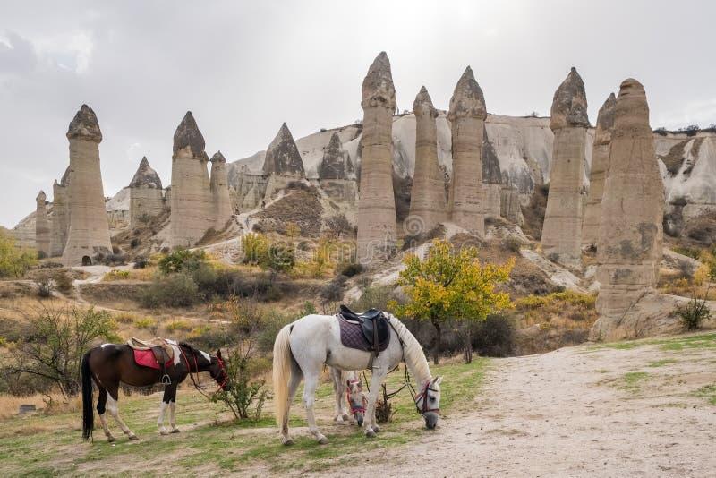 Chevaux avec des formations de roche célèbres au fond en vallée d'amour, Cappadocia photographie stock libre de droits