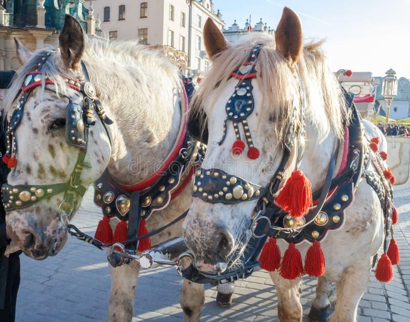 Chevaux avec le chariot sur la place principale du march? ? Cracovie image stock