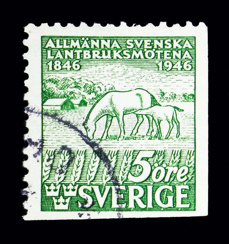 Chevaux (caballus de ferus d'Equus), centenaire d'agricole suédois illustration de vecteur