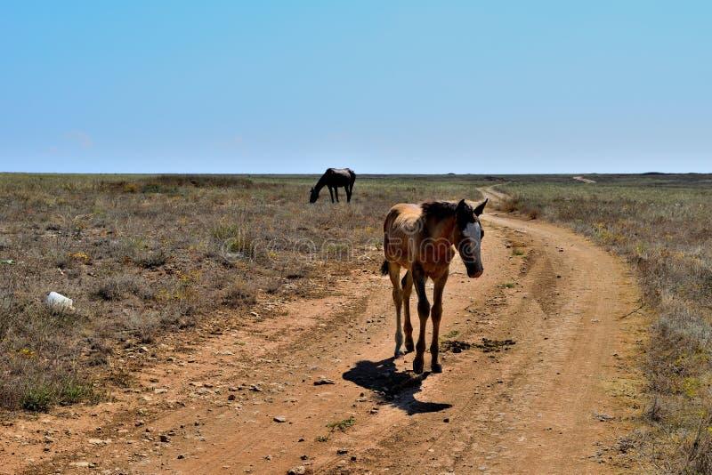 Chevaux chez les chevaux de steppe photographie stock