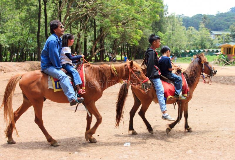 Chevaux d'équitation dans la ville de Baguio, Philippines photographie stock libre de droits