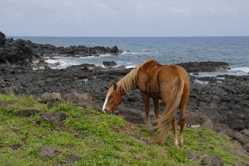 Chevaux d'île de Pâques photographie stock libre de droits