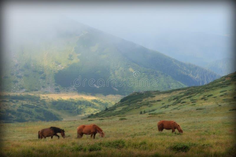 Chevaux dans les collines vertes des montagnes, photographie stock