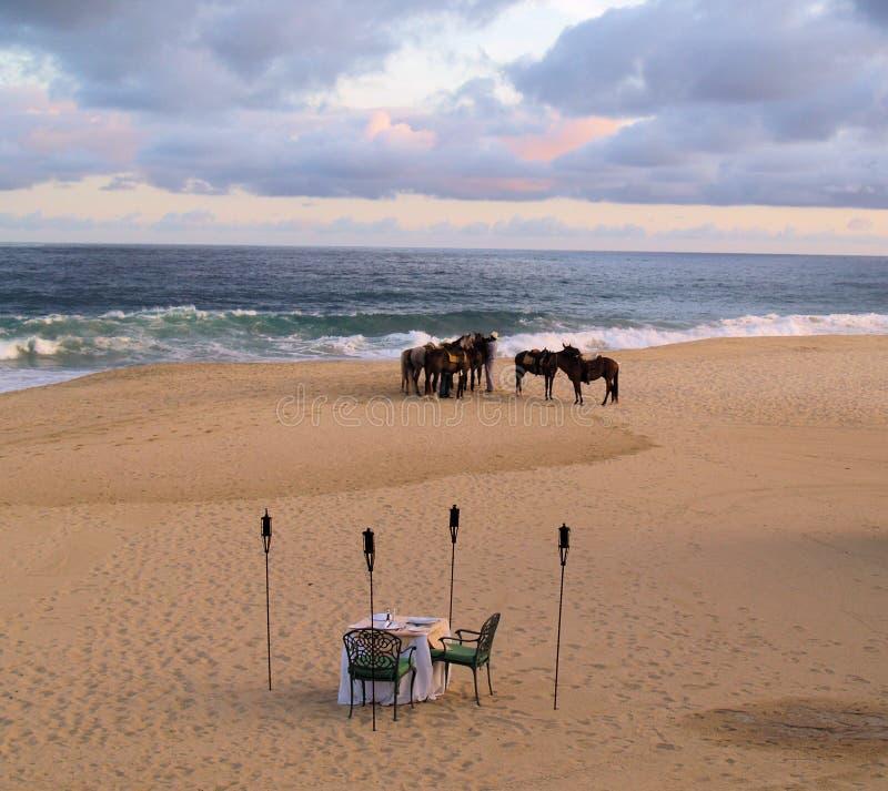 Chevaux dans Los Cabos Mexique photos stock