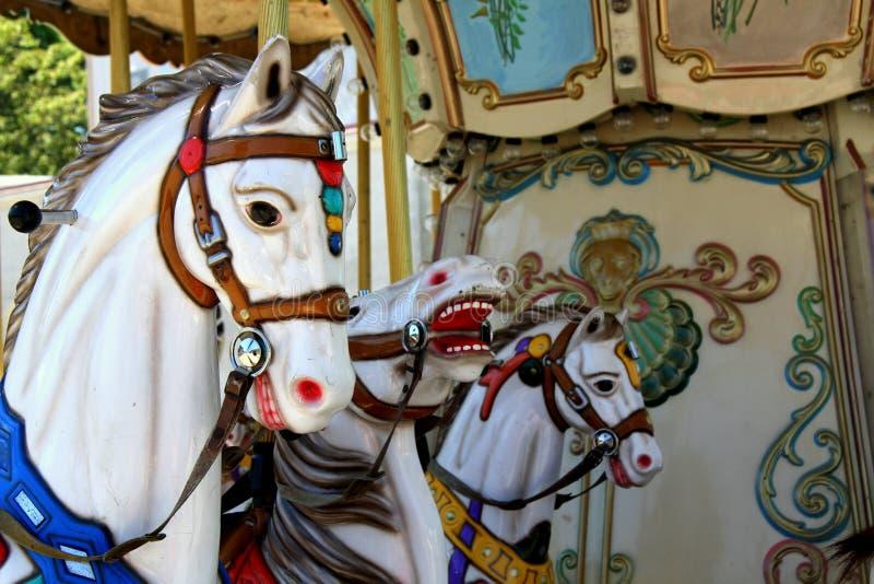 Chevaux De Carrousel Au Parc D Attractions Photos stock