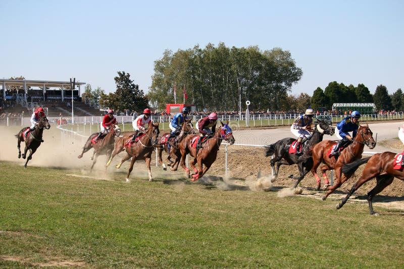 Chevaux de course avec galoper de jockeys photos stock