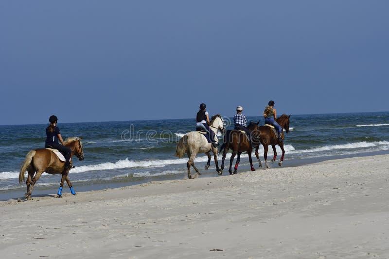 Chevaux de plage photographie stock libre de droits