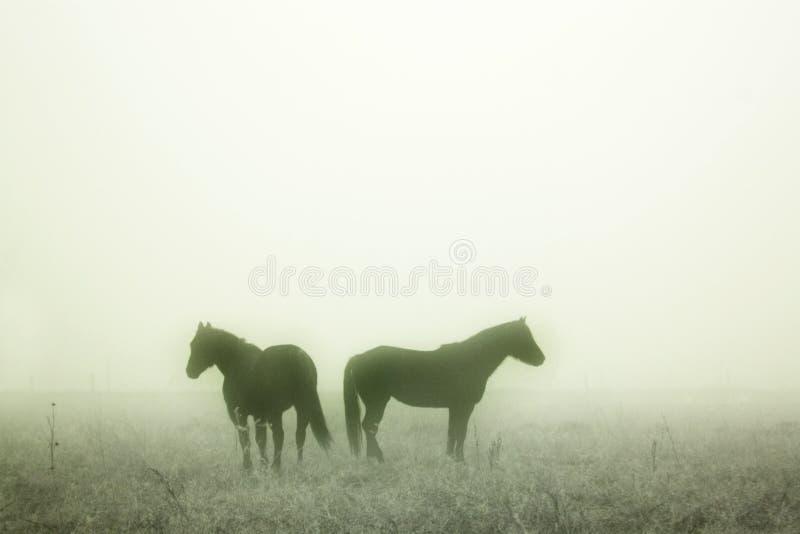 Chevaux de prairie image libre de droits