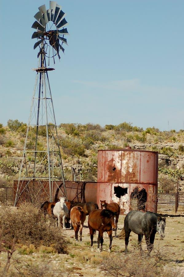 Chevaux de ranch images stock
