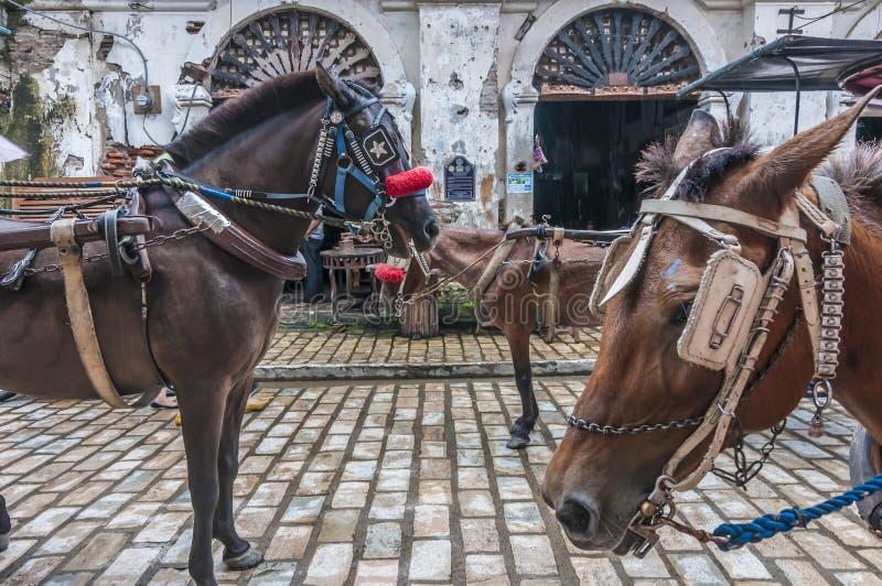 Chevaux de Vigan Ilocos Sur images libres de droits