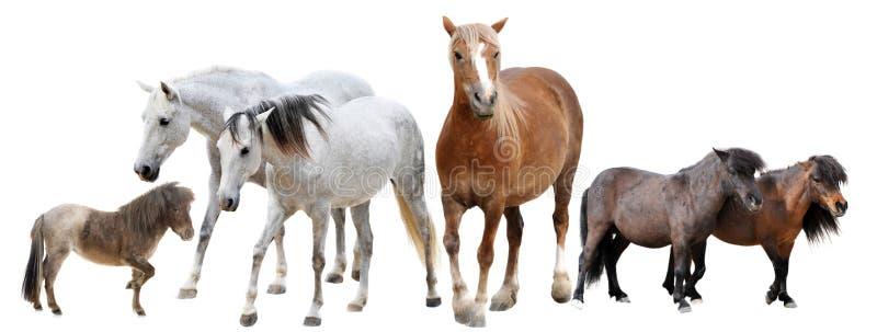 Chevaux et poneys photographie stock