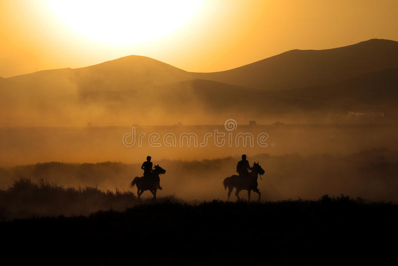 Chevaux galopants à la nature Fonctionnement de chevaux photos stock
