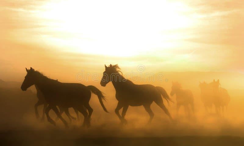 Chevaux galopants à la nature Fonctionnement de chevaux images stock