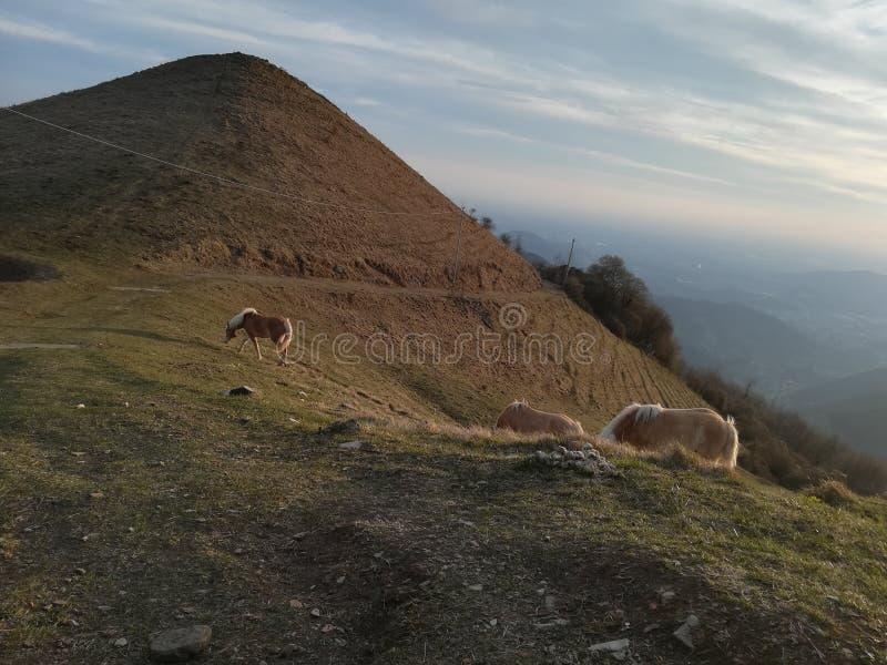 Chevaux libres sur les montagnes images libres de droits