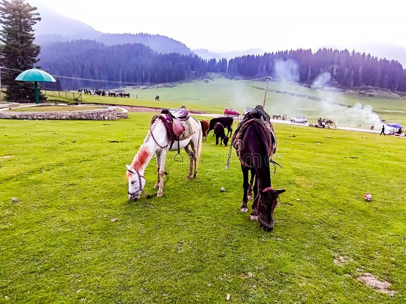 Chevaux mangeant l'herbe à l'Inde de Doodpathri Cachemire tandis que la fumée est derrière photos libres de droits