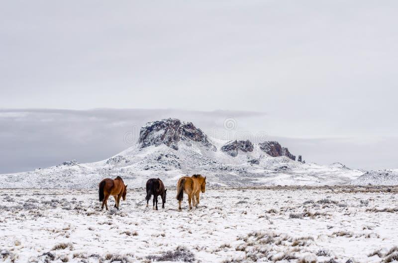 Chevaux marchant loin au fond sur un champ neigeux dans un jour nuageux photo libre de droits