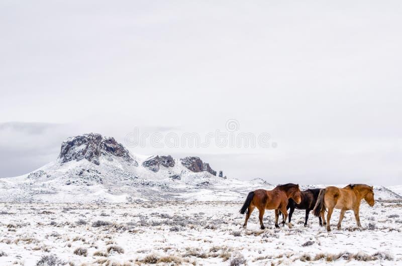 Chevaux marchant loin vers la droite sur un champ neigeux dans un jour nuageux photographie stock libre de droits