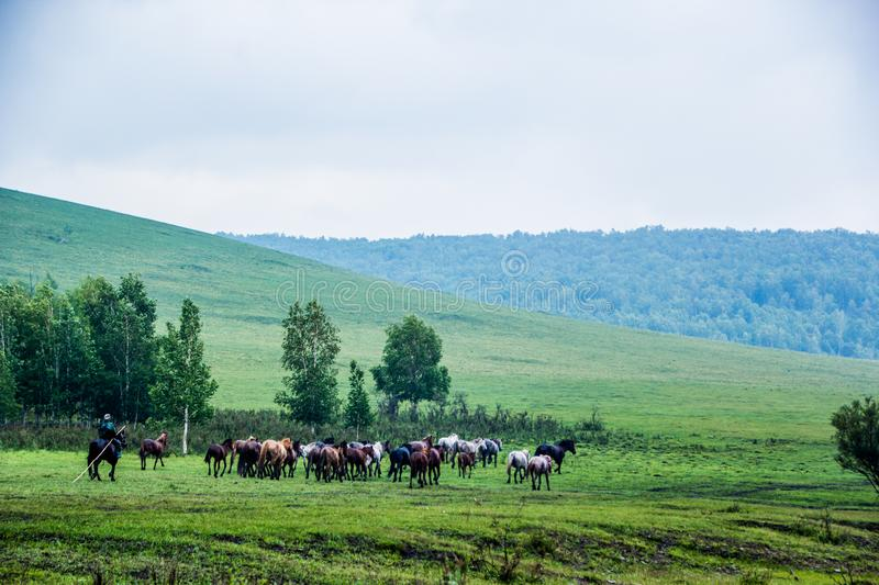 Chevaux sauvages en nature-Chine photo stock