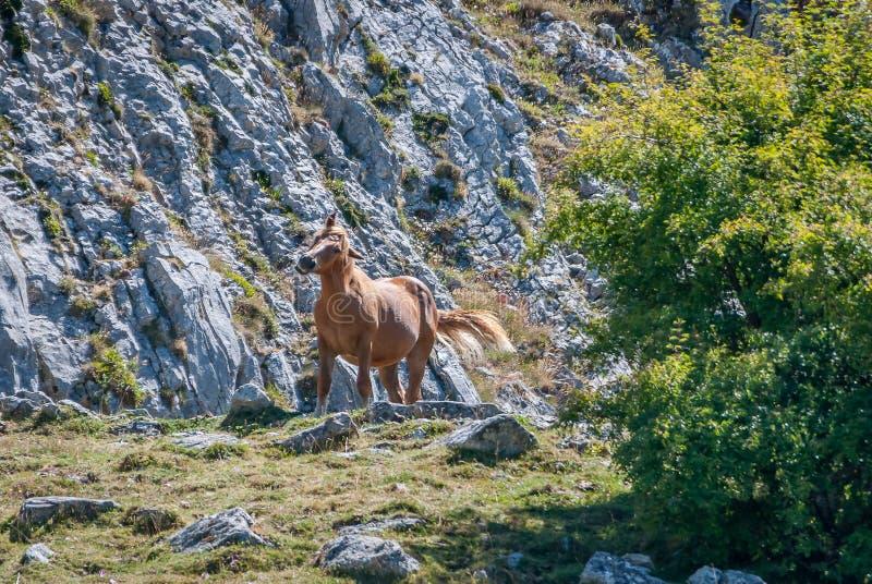 Chevaux sauvages en parc national de Fuentes Carrionas Palencia photographie stock
