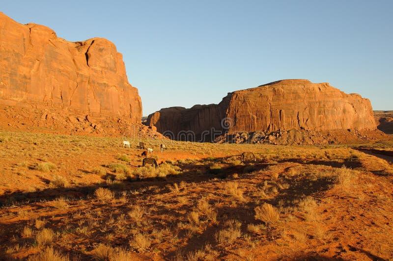 Chevaux sauvages en vallée de monument au coucher du soleil photo libre de droits