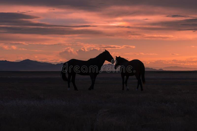 Chevaux sauvages silhouettés au coucher du soleil photo stock