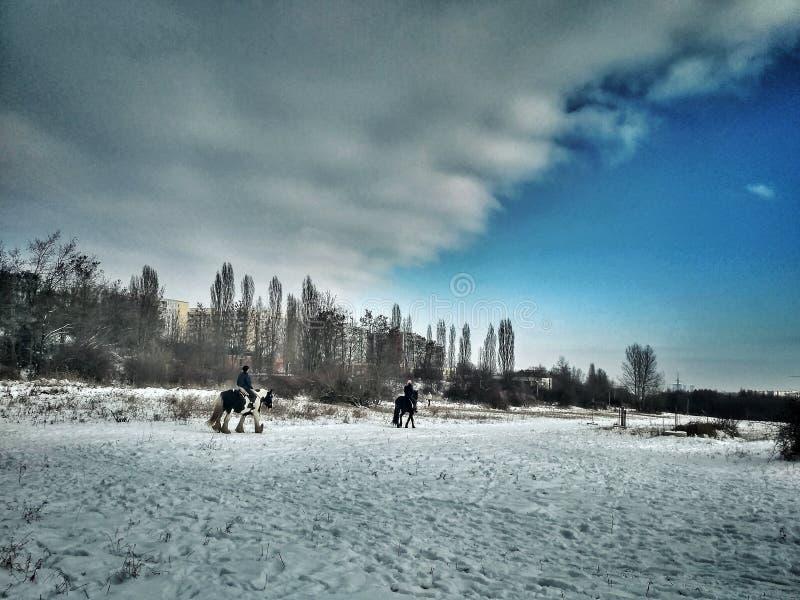 Chevaux sur la neige photo libre de droits