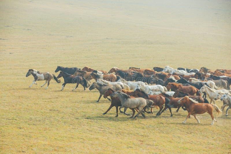 Chevaux sur la prairie de l'Inner Mongolia, Chine photographie stock